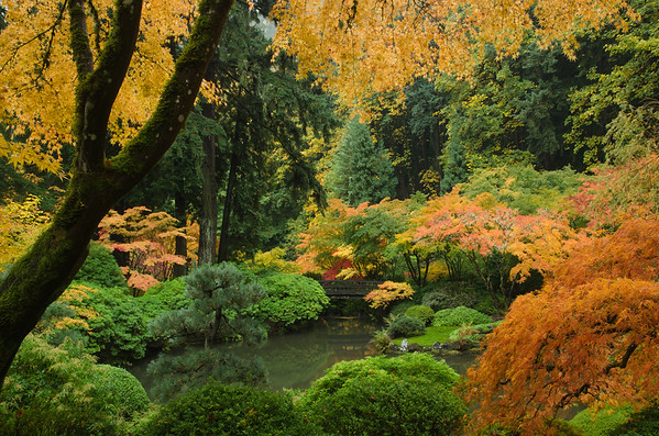 Japanese Garden Autumn