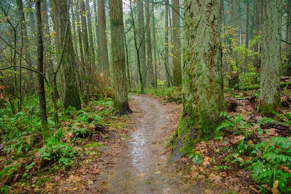 Portland Trail #3