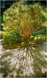 Shadows, Portland Japanese Garden