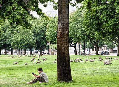 man-park-geese