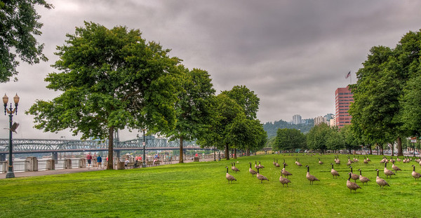 park-geese