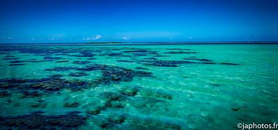 Coral Garden, Moorea Island, French Polynesia