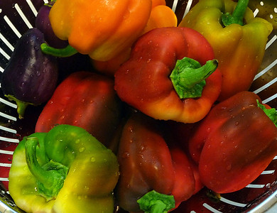 Garden Fresh Peppers