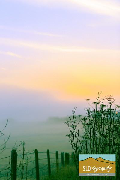 Sunrise_008