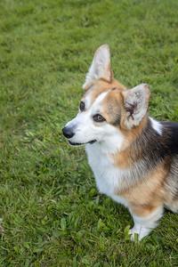 Mary's dog-008