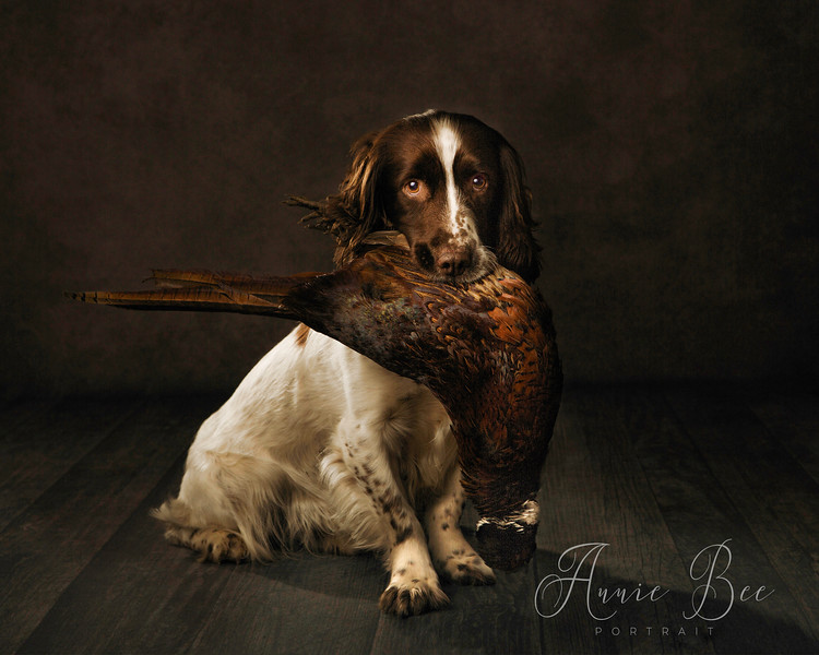 The Gun Dog