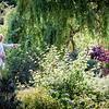 Fred & Rosie: Garden.