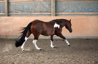 Good N Lazy Stallion