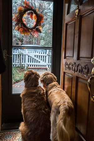 The greeters of our homes.