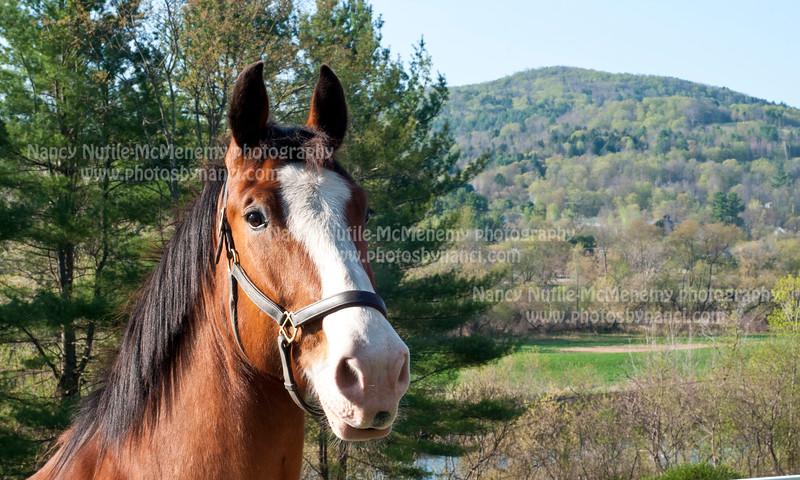Horse_PBN_7060