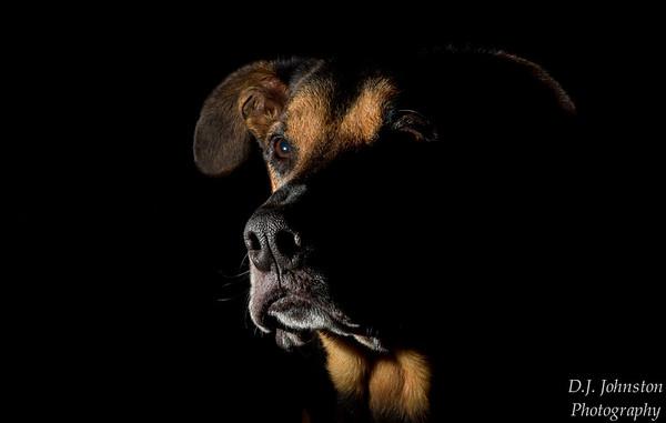 Johnston // Pet Portraits // Nov 2017
