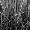 ring-sea-grass-macro-ocean-dr-kiawah-island-charleston-sc-engagement-kate-timbers-photography-3787