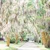 path-road-tree-spanish-moss-Hampton-park-charleston-sc-engagement-kate-timbers-photography-3128