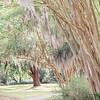 tree-spanish-moss-Hampton-park-charleston-sc-engagement-kate-timbers-photography-3126