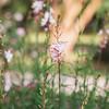 pink-wild-flower-Hampton-park-charleston-sc-engagement-kate-timbers-photography-3127