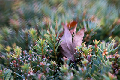 Lensbaby Sol 45mm Tilt Shift Lens