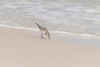 Gulf_shores_MG_7716