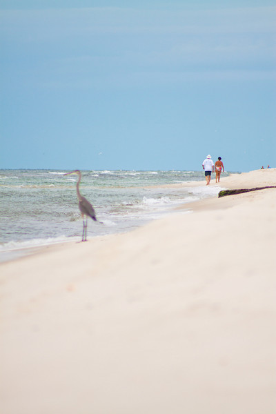 Gulf_shores_MG_8391