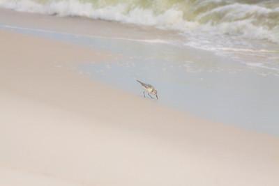Gulf_shores_MG_7715