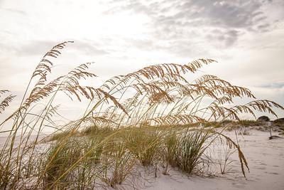 Gulf_shores_MG_7686