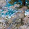 2011_Tahoe-153