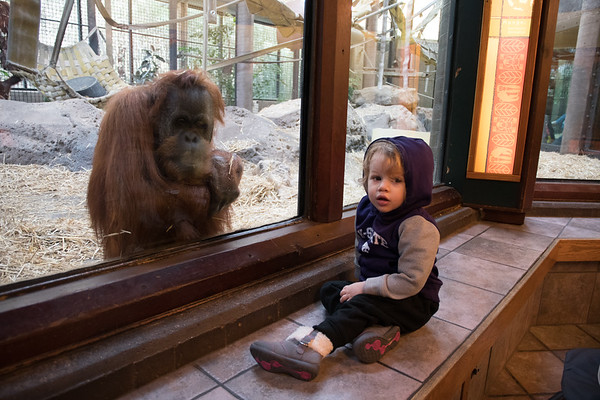 Zoo Animals-5