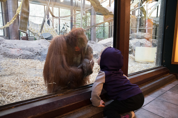 Zoo Animals-6