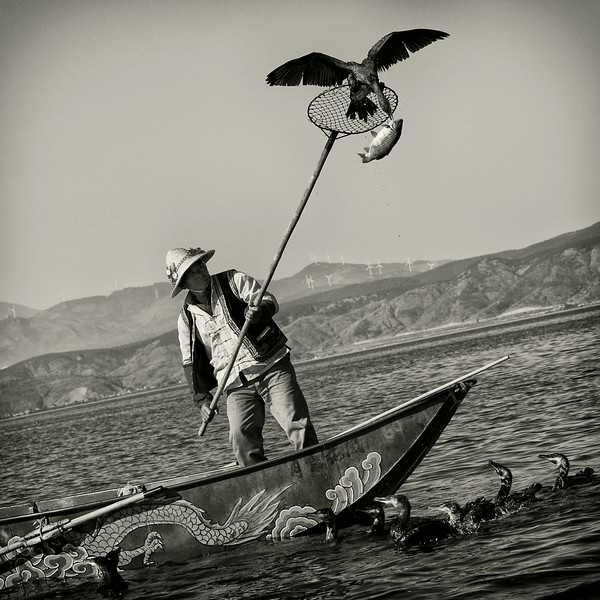 Cormorant Fisherman, Yunnan, China