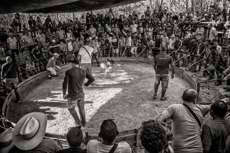 Cockfight Arena, Cuba