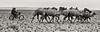 Camel Herders, Mongolia