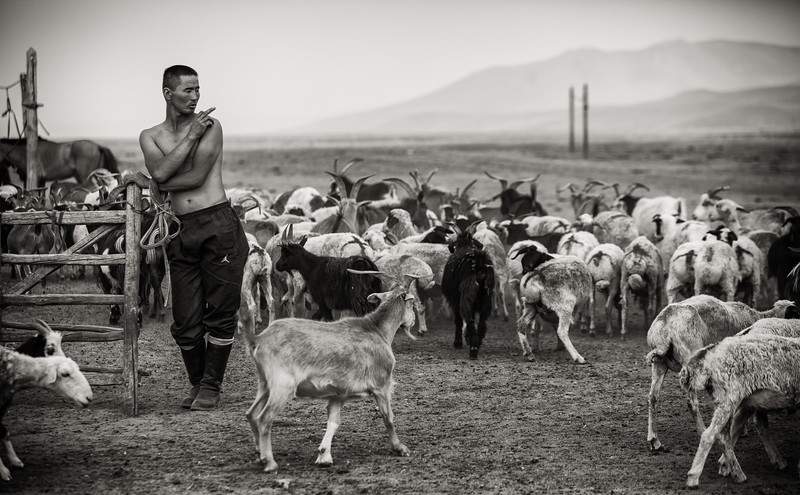 Counting Goats, Mongolia