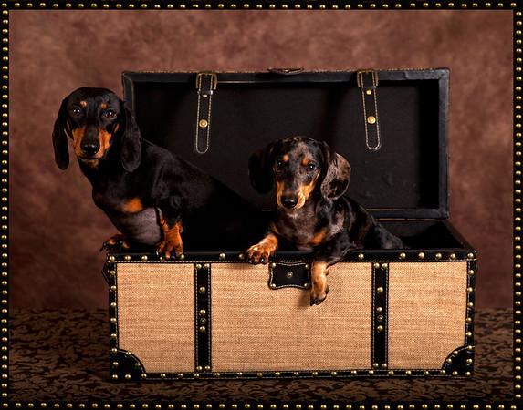 Pet Portrait Pricing