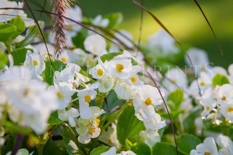 Flower 3-7328