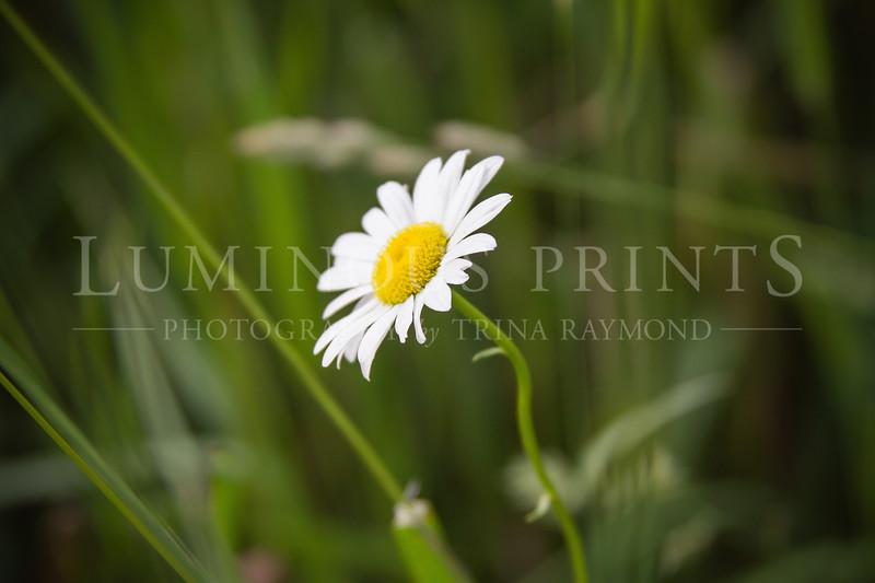 Flower-2764