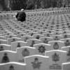 Une pensée solitaire - Solitary remembrance