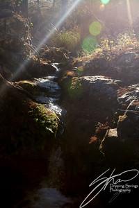 DrC Landscape-1241-2