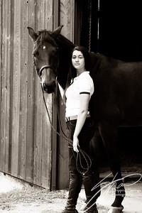 MK horse-2587