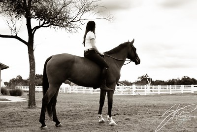 MK horse-2436