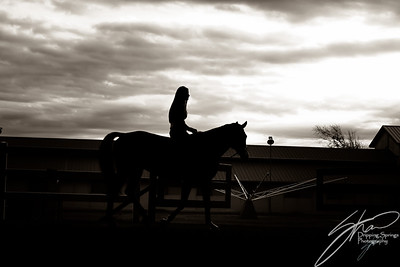 MK horse-2378