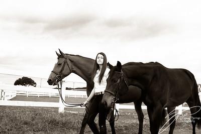 MK horse-1886