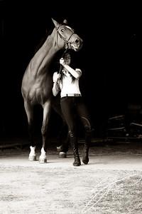 MK horse-2194