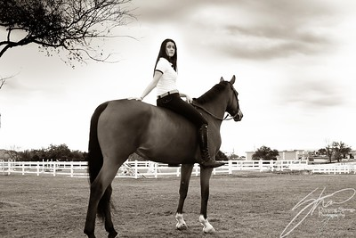 MK horse-2453