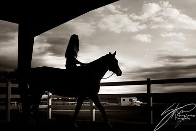 MK horse-2395