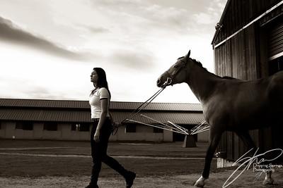 MK horse-2273