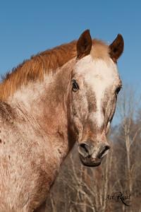 Equine Portraits
