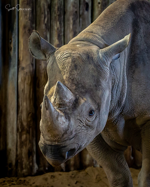 Blackpool_Zoo_Phoographer_FB_160920_032