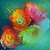 Glass Petals