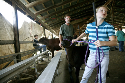 The Oakley family is seen making some final preperations to their cattle before showing them at the Coles County Fair Ground in Charleston on Tuesday, July 29, 2008. (Jay Grabiec/Staff Photographer)