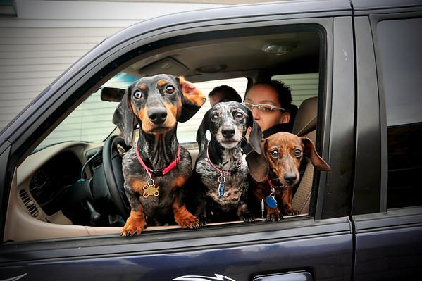 Kennebunk Savings Dogs