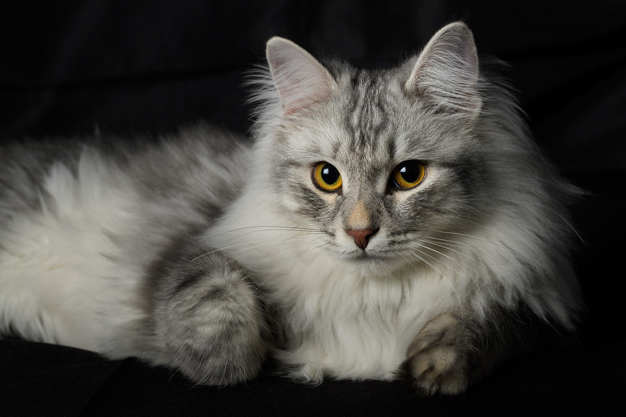 Dmitri Portrait